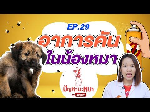 คันจริง คันจัง อาการคันในน้องหมา   ตอบปัญหามะหมา EP.29