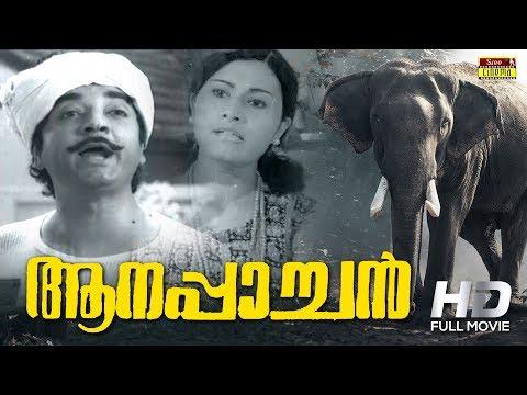 Aanappaachan Malayalam Full Movie | Prem Nazir | Sheela | Sree Movies