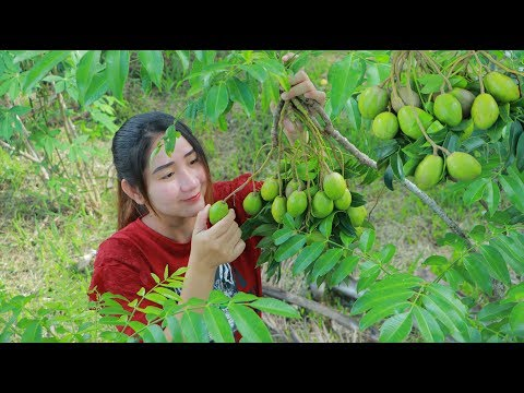 Yummy June Plum Cooking Fish – Picking June Plum – Cooking With Sros