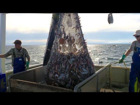 On Board Fishing Trawler