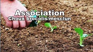 Play Brocoli