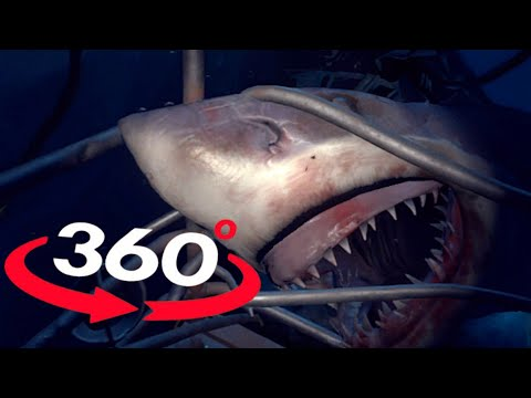 VR Videos 360 SHARK VR - OMG Will you survive? Virtual Reality 360 Video POV 180°