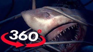 vr videos 360 shark vr omg will you survive virtual reality 360 video pov 180