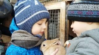 МАЛЕНЬКАЯ ФЕРМА с животными гуляем и гладим кроликов
