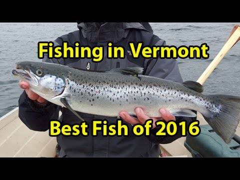 Best fish of 2016 vermont youtube for Vermont fishing license