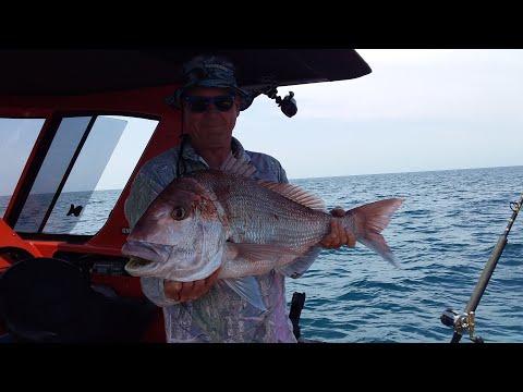 Hawkes Bay Napier Fishing 2019 New