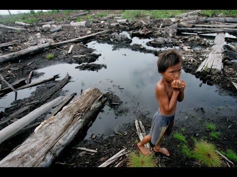 Global Journalist: Indonesia's rapid deforestation