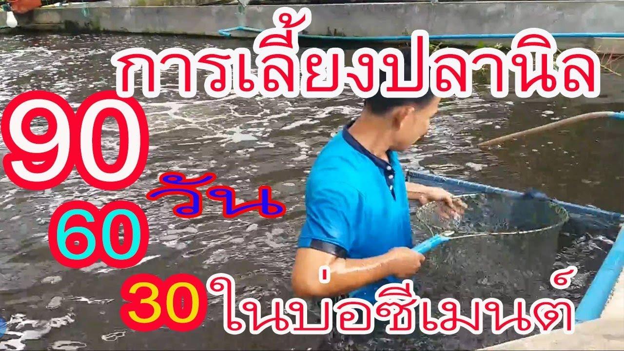 วิธีการเลี้ยงปลานิลในบ่อซีเมนต์,บ่อปูน 3 เดือน,2เดือน,1เดือน