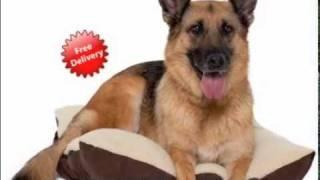 Zonk Pet Products & Bali Animal Welfare Association - FREE Dog Beds Partnership