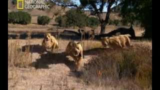 Depredadores prehistóricos (Mandíbulas mortales)