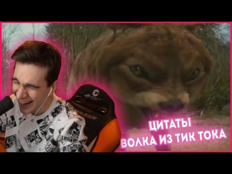 БРАТИШКИН СМОТРИТ - ЦИТАТЫ ВОЛКА ИЗ ТИК ТОКА