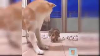 #pet #animal #kidFORGET CATS! Funny KIDS vs ZOO ANIMALS are WAY FUNNIER! - TRY NOT TO LAUGH