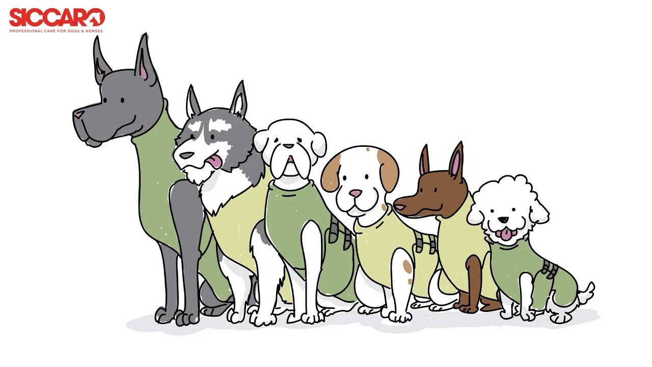 WetDog, der saugfähigste Hundemantel der Welt! - YouTube