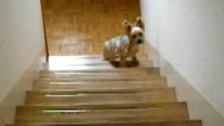 このごろ階段の半分まで上って、踊り場で立ち止まってしまうはな。 上に...