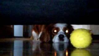 ソファの下のボールがほしいんです.