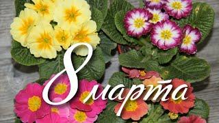Поздравляем милых женщин с праздником весны 8 марта