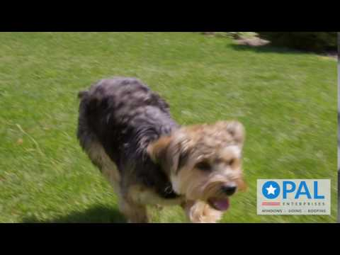 """Opal Exteriors """"Campaign"""" Series - Eli & the puppy"""