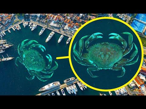 Okyanuslarımızı Dev Yengeçler İstila Etseydi Neler Olurdu?