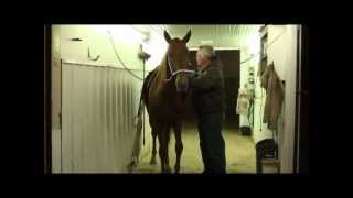 Walking Horse Mare for Sale: Lucky Red Lady.wmv