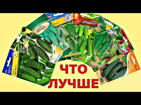 КАК выбрать СЕМЕНА ОГУРЦОВ? Какой сорт лучше? | природного | земледелия | сморчкова | открытого | практика | огурцов | огороде | наталья | теплиц | грунта