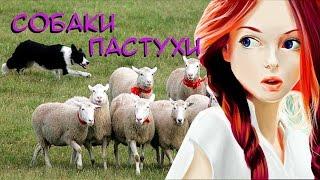 Обзор мода DoggyStyle/Это что-то новенькое! Собаки пастухи в Майнкрафт