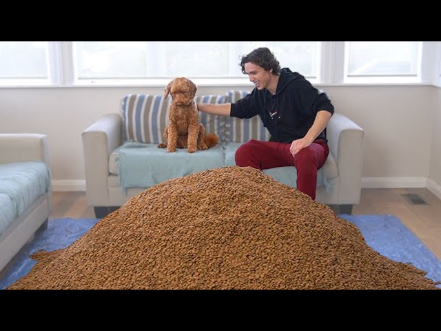 Surprising My Dog With 1,000,000 Pieces of Dog Food