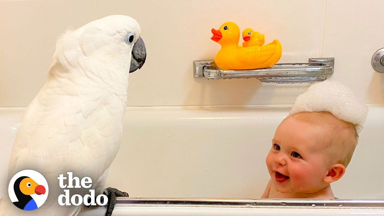 Cockatoo And Baby Boy Do Everything Together | The Dodo Soulmates