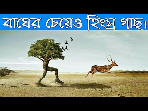 Download মানুষ খেকো গাছ   Manush Kheko Gach   যে গাছ মাংস খেয়ে বেঁচে থাকে   Carnivorous Plants in Bengali
