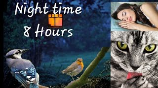 Videos For Cats To Watch - Night Time For Active Pets While You Sleep : 8 Hours