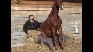 Missouri Foxtrotter Trail partner for sale(Walter)Please share this video