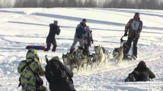 Первый сибирский фестиваль северных ездовых собак и культуры народов севера «Хаски Фест»