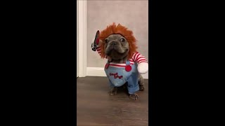 Funny dogs #21