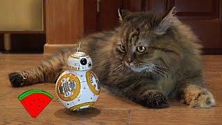 Робот дразнит КОТА *** BB-8 annoying cat (Star Wars)