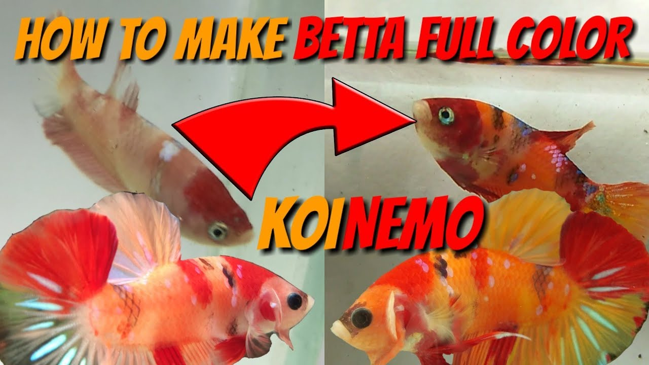 how to change betta fish color from diet