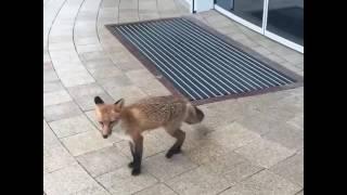 Лисичка ждёт открытия океонариума!!!