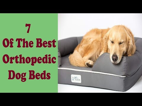 7-of-the-best-dog-beds-for-extra-large-dog-breeds-2019.