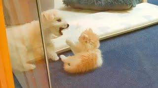 아깽이와 아기 비숑의 싸움 1