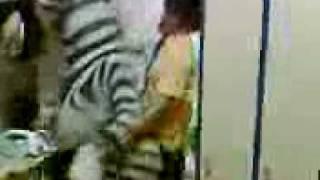 Мадагаскар 2. Интимная жизнь зебры