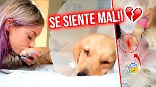 LA CIRUGÍA CAMBIÓ A MI PERRITA!! 😭💔 NADA SERÁ IGUAL 😞 |  04 Sept 2019