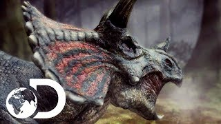 Can a Triceratops beat a T-Rex in a fearsome duel? Find out how the...