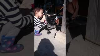 土佐犬、子犬。KARAの子供。成長期。2ヶ月。孫2才。バイクのとりあい(笑)