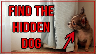 10 Find The Hidden Dog Puzzles