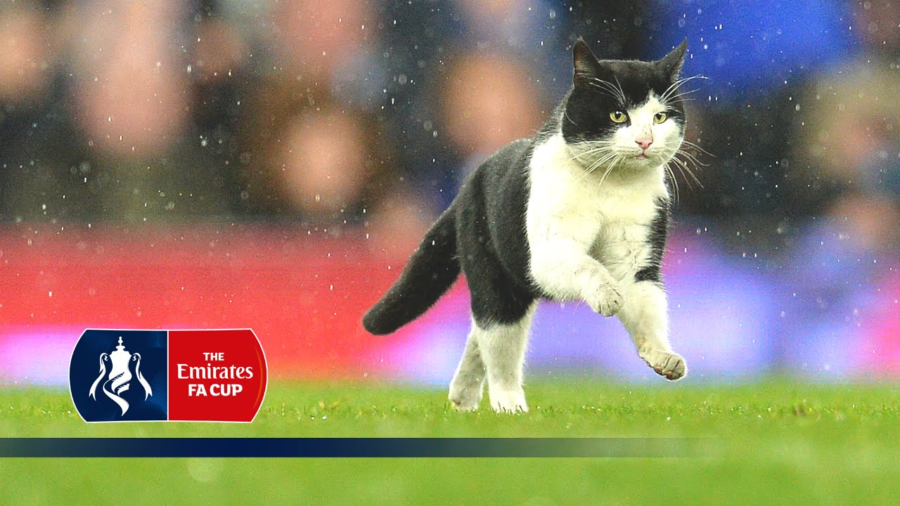 Cat invades pitch during Evert...
