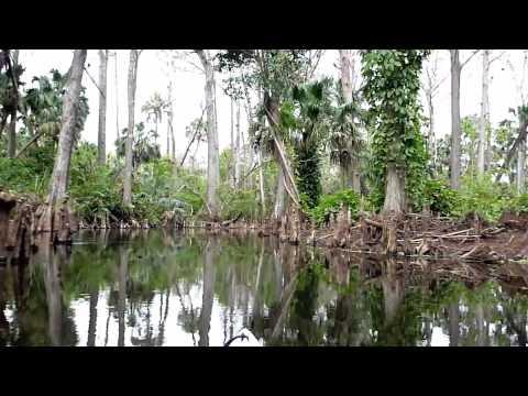 Wild and Scenic Upper Loxahatchee River Kayaking