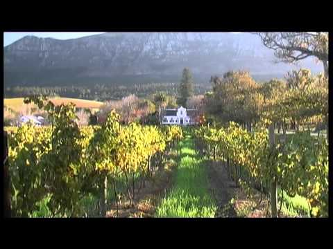 Constantia Vineyards, Cape Town Big 6 - South Africa Tourism