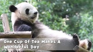 One Cup Of Tea Makes A Wonderful Day | iPanda