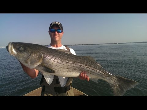 Hammering Big Striped Bass (Part 2) Fishing Long Island Sound