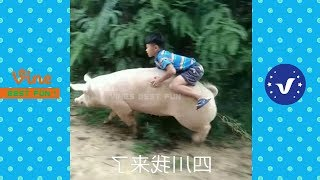 Download Funny Videos 2017 ● People doing stupid things P50 MP3 and video free