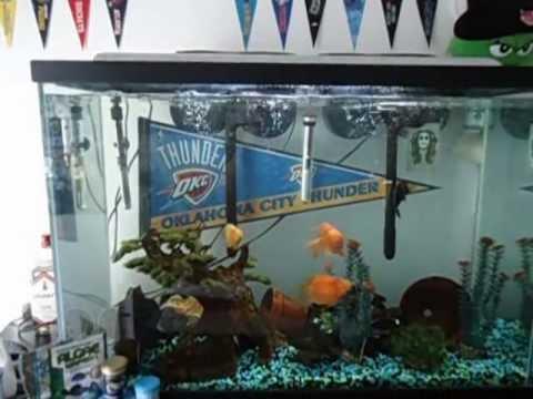 55 Gallon Cichlid Fish Tank Blood Kirin Bubblegum Parrot Family