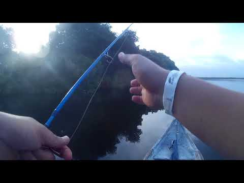 Pescando en la cienaga de la Caimanera, Coveñas, Sucre, Colombia